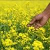 Pour régénérer votre sol à la fin de l'été et en automne, pensez à semer des engrais verts.