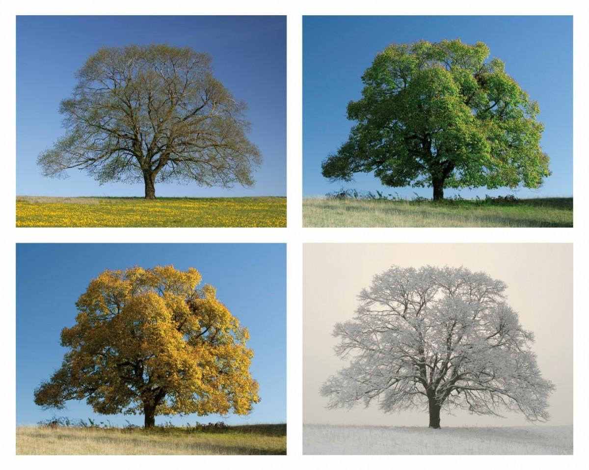 Arbre printemps t automne hiver images - Printemps ete automne hiver et printemps ...