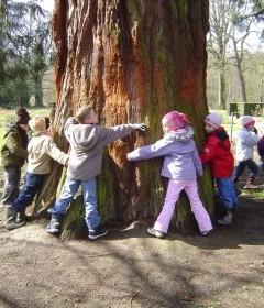 Secrets d'arbres aux 4 saisons