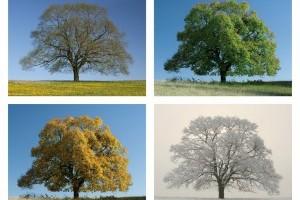 L'arbre au fil des saisons