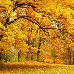 Visite du Parc  «Couleurs d'automne»