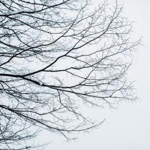 Visite du Parc «L'arbre en hiver»