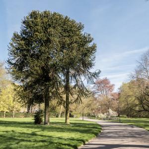 Visite gratuite du Parc
