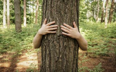 L'arbre en tous sens