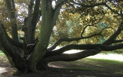 Le Parc de Mariemont, un écosystème