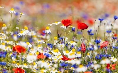 Dans le secret des fleurs