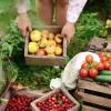 Appel à projets 'Alimentation saine et durable'