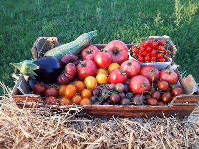 Cet été nous vous proposerons 40 variétés de tomates bio !